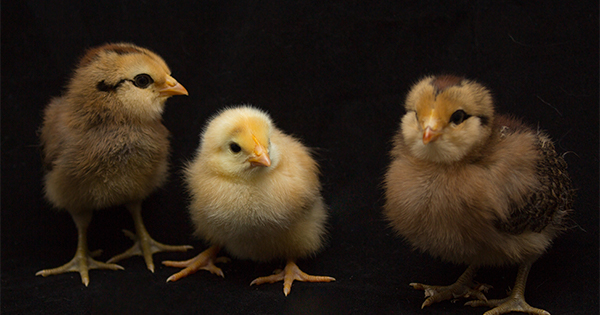Why All the Chicken Littles Should Calm Down | Bridge Builders